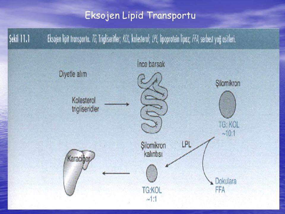 23 Eksojen Lipid Transportu
