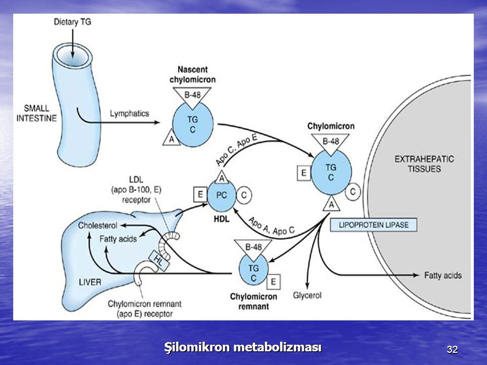 32 Şilomikron metabolizması