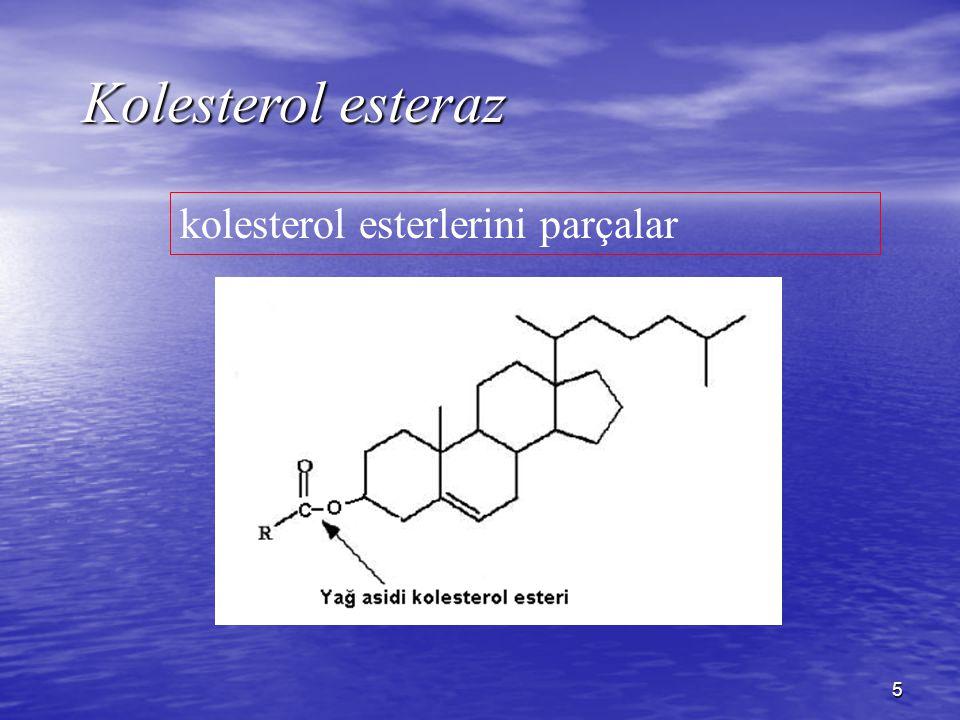 5 Kolesterol esteraz kolesterol esterlerini parçalar