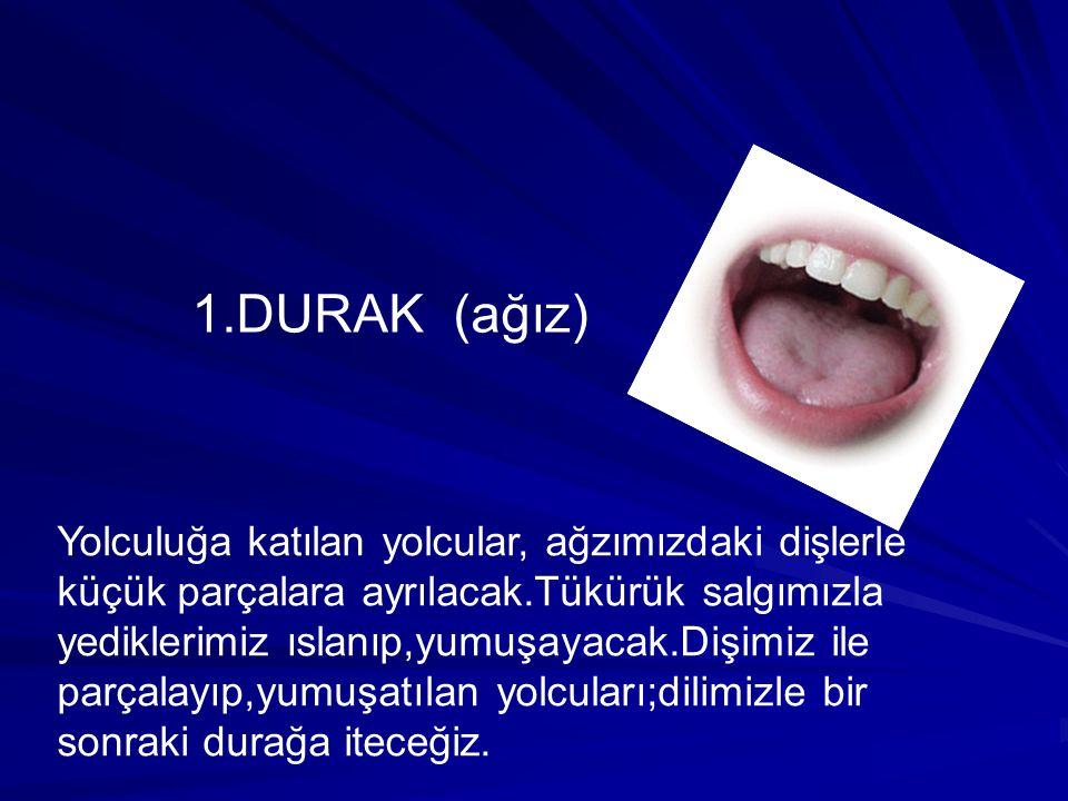 1.DURAK (ağız) Yolculuğa katılan yolcular, ağzımızdaki dişlerle küçük parçalara ayrılacak.Tükürük salgımızla yediklerimiz ıslanıp,yumuşayacak.Dişimiz