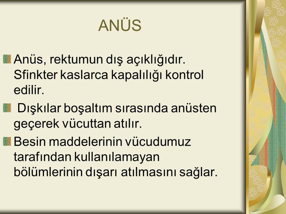 ANÜS Anüs, rektumun dış açıklığıdır.Sfinkter kaslarca kapalılığı kontrol edilir.