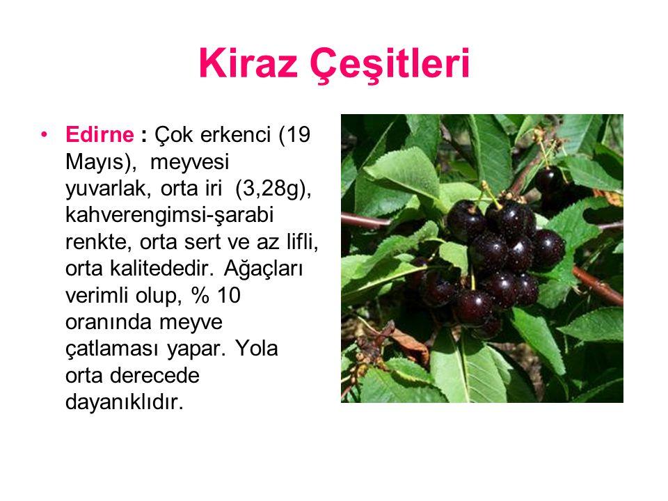 Kiraz Çeşitleri Edirne : Çok erkenci (19 Mayıs), meyvesi yuvarlak, orta iri (3,28g), kahverengimsi-şarabi renkte, orta sert ve az lifli, orta kalitededir.
