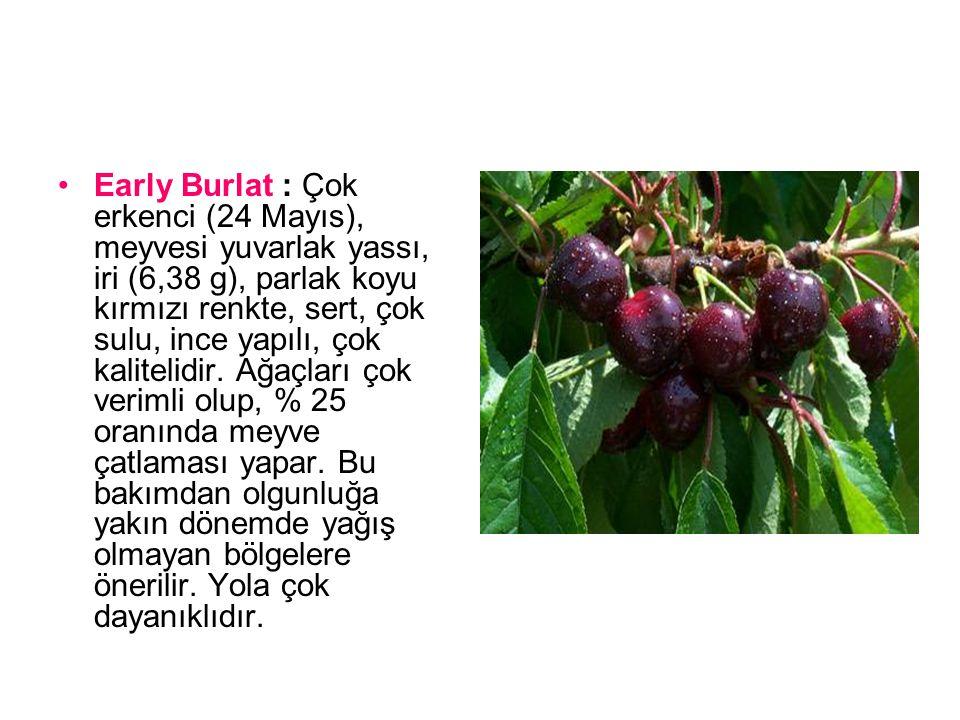 Turfanda : çok erkenci (21 Mayıs), meyvesi kalp şeklinde, orta iri (3,72g), morumsu-şarabi renkte, orta sert, orta sulu, lifli, orta kalitededir.