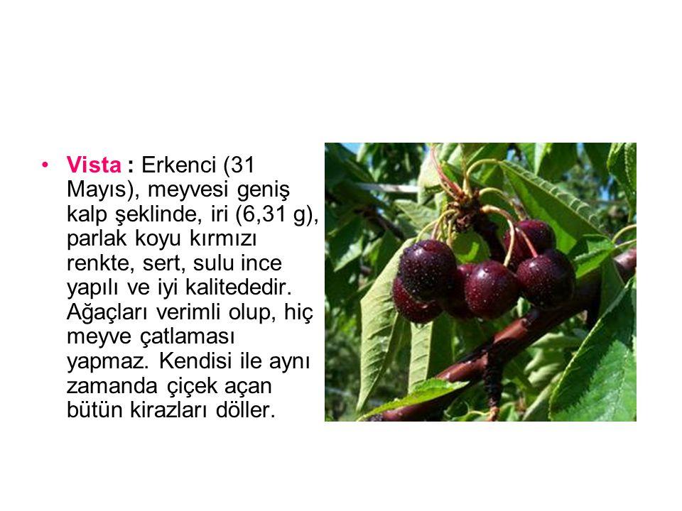 Vista : Erkenci (31 Mayıs), meyvesi geniş kalp şeklinde, iri (6,31 g), parlak koyu kırmızı renkte, sert, sulu ince yapılı ve iyi kalitededir.