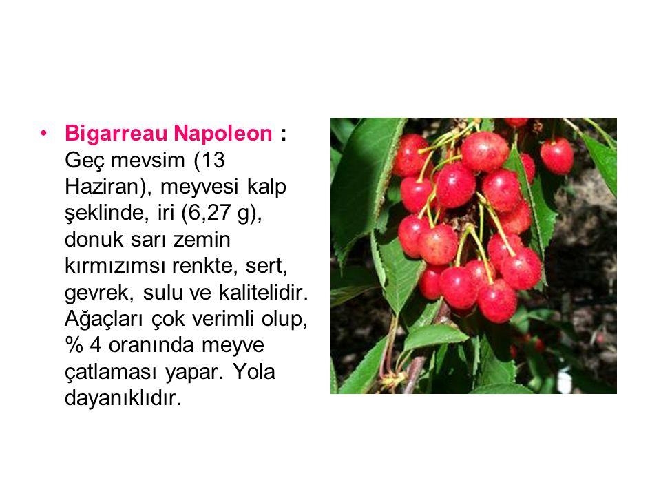 Bing : Geç mevsim (13 Haziran), meyvesi kalp şeklinde, çok iri (7,28 g), orta parlak, şarabi koyu kırmızı renkli, sert, gevrek, sulu ve çok kalitelidir.