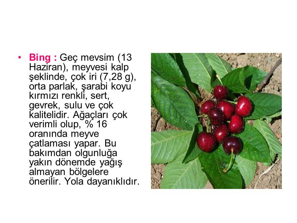 Van : Geç mevsim (12 Haziran), meyvesi yuvarlak kalp şeklinde, çok iri (7,91 g), çok parlak kırmızı renkli, çok sert, gevrek, sulu ve çok kalitelidir.
