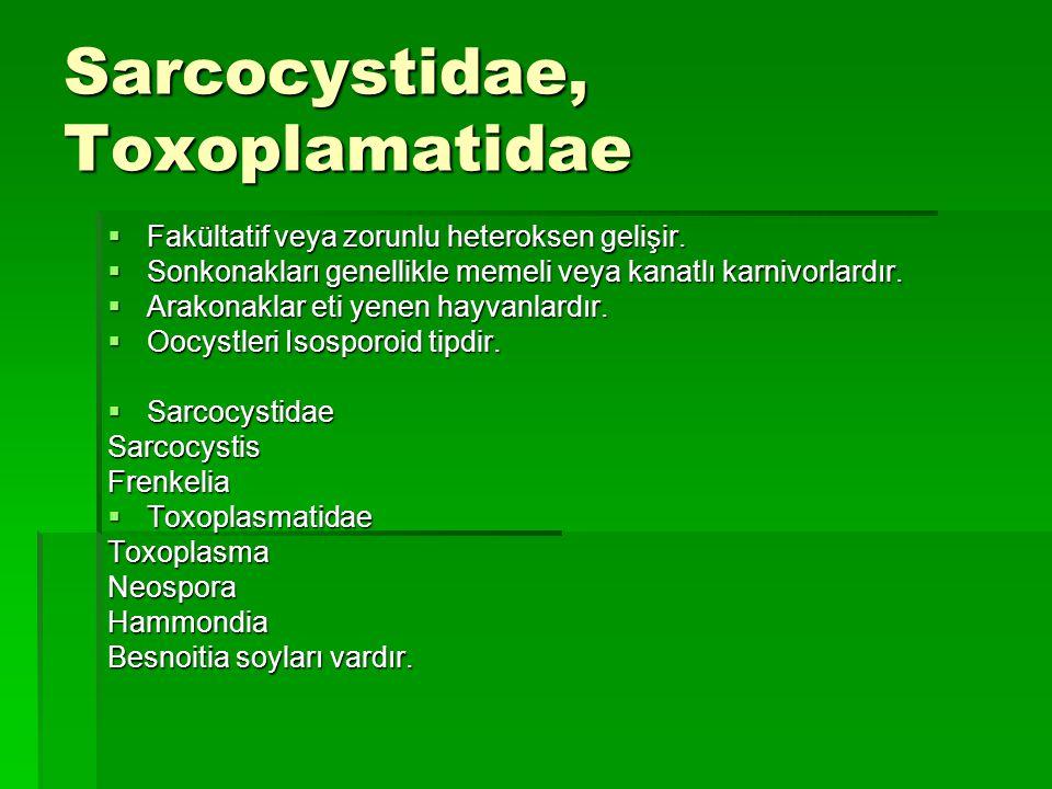 Sarcocystis Enfeksiyonları Sarcocytosis  Sonkonak: Karnivor hayvanlar ve insan İnce barsak propria mukozasında yerleşir  Arakonak: Sonkonağın avı konumunda olan veya eti tüketilen hayvanlar (ruminant, domuz gibi) Önce damar endotellerinde (takizoitler), sonra kaslarda (bradizoit, kistozit, kas kistleri) bulunur.