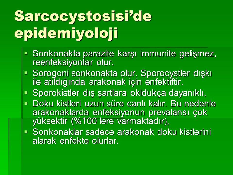 Sarcocystosisi'de epidemiyoloji  Sonkonakta parazite karşı immunite gelişmez, reenfeksiyonlar olur.  Sorogoni sonkonakta olur. Sporocystler dışkı il