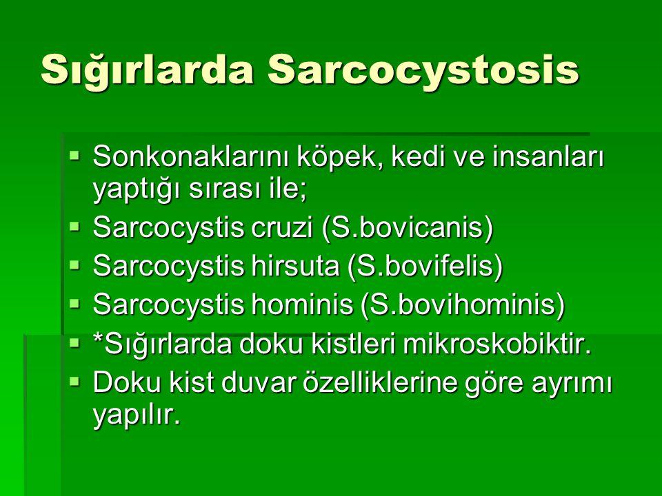Sığırlarda Sarcocystosis  Sonkonaklarını köpek, kedi ve insanları yaptığı sırası ile;  Sarcocystis cruzi (S.bovicanis)  Sarcocystis hirsuta (S.bovi