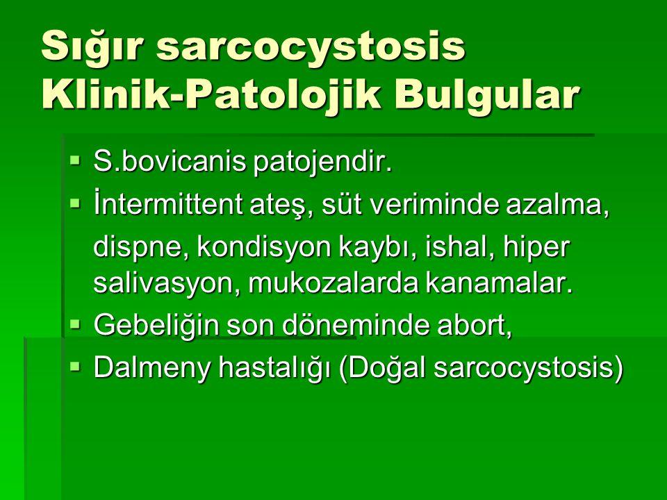 Sığır sarcocystosis Klinik-Patolojik Bulgular  S.bovicanis patojendir.  İntermittent ateş, süt veriminde azalma, dispne, kondisyon kaybı, ishal, hip