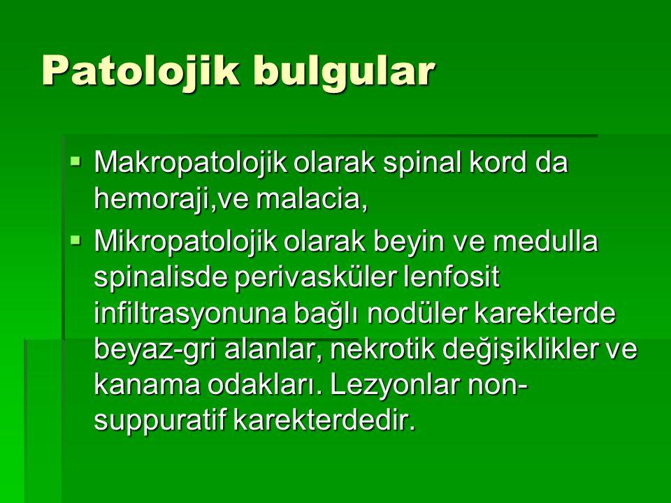 Patolojik bulgular  Makropatolojik olarak spinal kord da hemoraji,ve malacia,  Mikropatolojik olarak beyin ve medulla spinalisde perivasküler lenfos