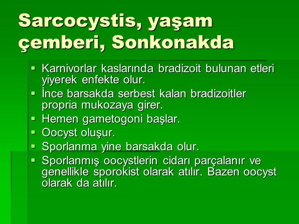 Domuz; Sarcocystis miescheriana (S.suicanis), S.suihominis, Doku kistleri makroskobik S.porcifelis, Doku kistleri mikroskobik Klinik olarak; Kilo kaybı, kas titremeleri, mozitis, topallama, dispne, deride döküntüler Atlarda; Sarcocystis fayeri S.equicanis S.bertrami Sonkonakları köpek.