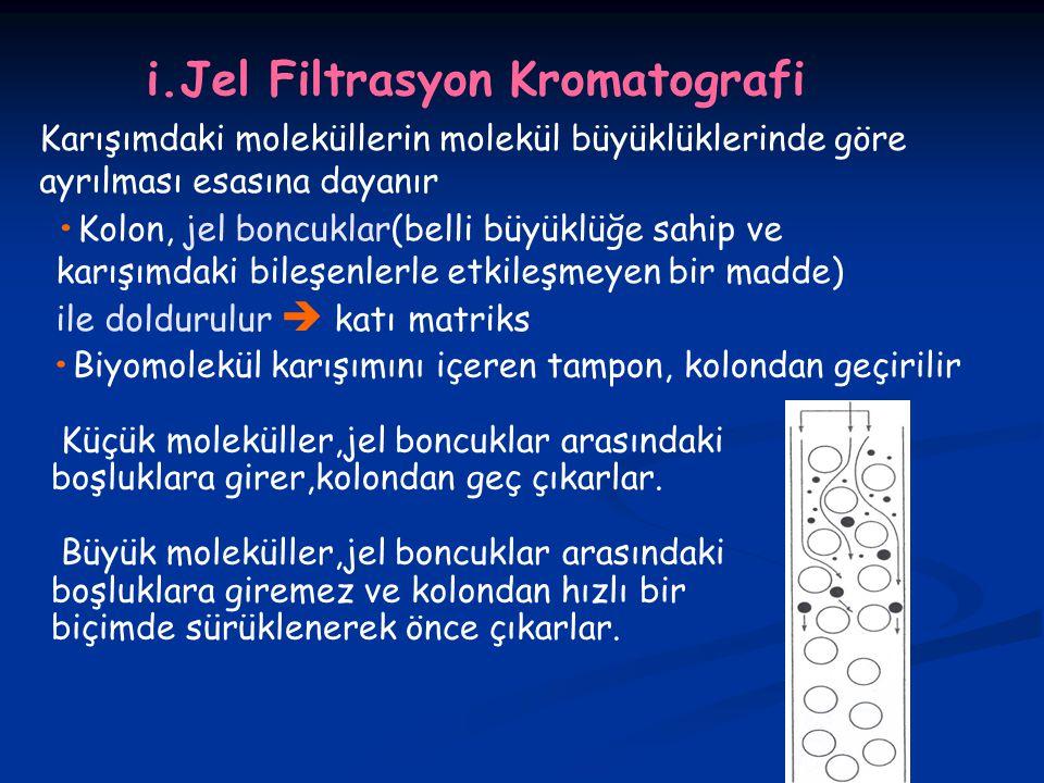 i.Jel Filtrasyon Kromatografi Karışımdaki moleküllerin molekül büyüklüklerinde göre ayrılması esasına dayanır Kolon, jel boncuklar(belli büyüklüğe sahip ve karışımdaki bileşenlerle etkileşmeyen bir madde) ile doldurulur  katı matriks Biyomolekül karışımını içeren tampon, kolondan geçirilir Küçük moleküller,jel boncuklar arasındaki boşluklara girer,kolondan geç çıkarlar.