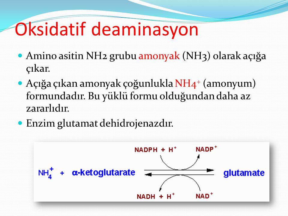 Oksidatif deaminasyon Amino asitin NH2 grubu amonyak (NH3) olarak açığa çıkar. Açığa çıkan amonyak çoğunlukla NH4 + (amonyum) formundadır. Bu yüklü fo