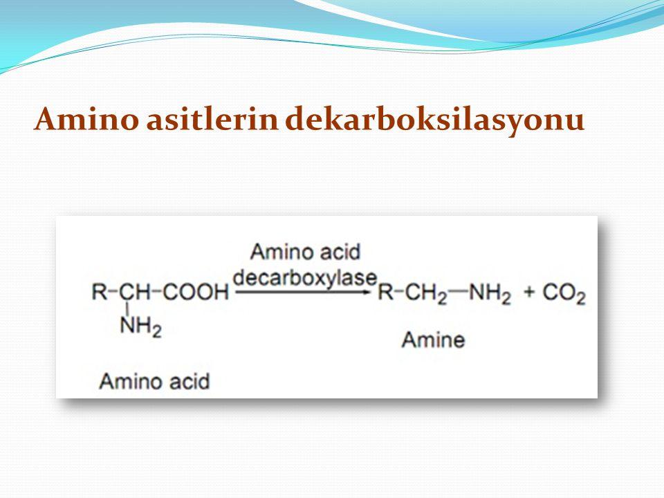 Amino asitlerin dekarboksilasyonu