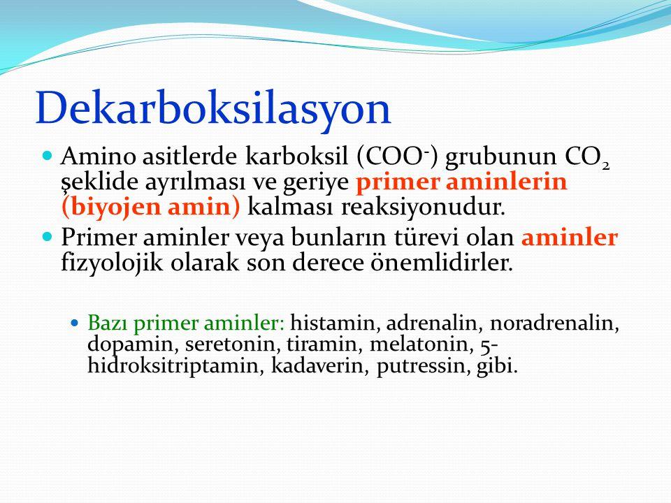 Dekarboksilasyon Amino asitlerde karboksil (COO - ) grubunun CO 2 şeklide ayrılması ve geriye primer aminlerin (biyojen amin) kalması reaksiyonudur. P