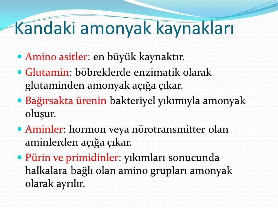 Kandaki amonyak kaynakları Amino asitler: en büyük kaynaktır. Glutamin: böbreklerde enzimatik olarak glutaminden amonyak açığa çıkar. Bağırsakta üreni