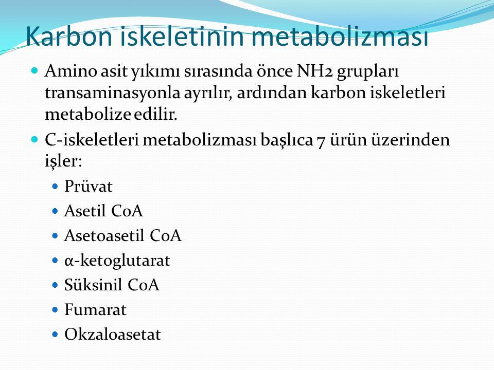 Karbon iskeletinin metabolizması Amino asit yıkımı sırasında önce NH2 grupları transaminasyonla ayrılır, ardından karbon iskeletleri metabolize edilir