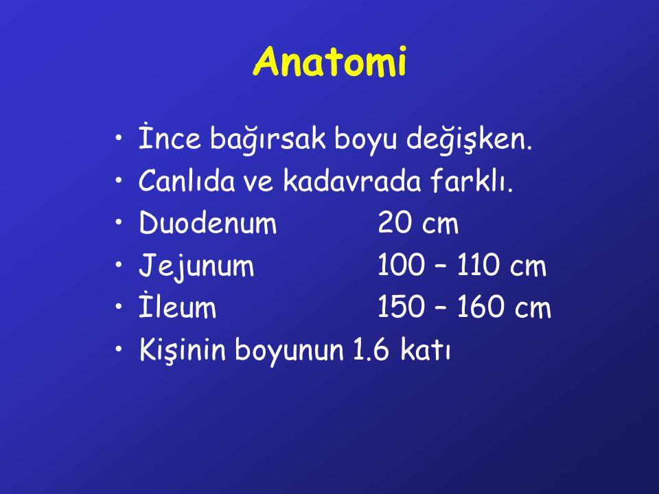 Anatomi İnce bağırsak boyu değişken. Canlıda ve kadavrada farklı. Duodenum20 cm Jejunum100 – 110 cm İleum150 – 160 cm Kişinin boyunun 1.6 katı