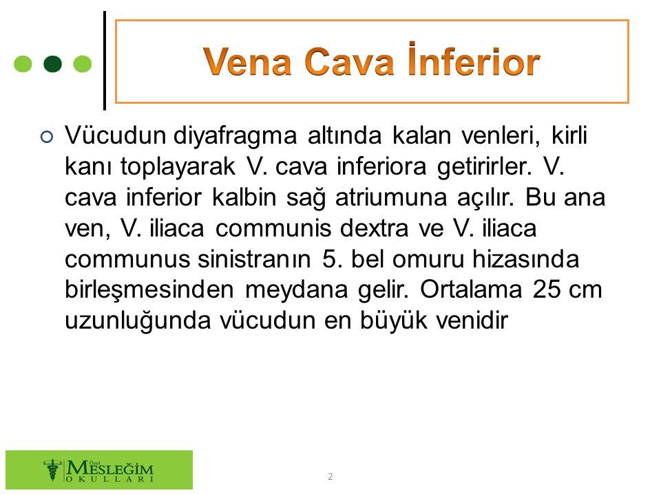 ○ Vena cava inferiora katılan venler şunlardır: V.