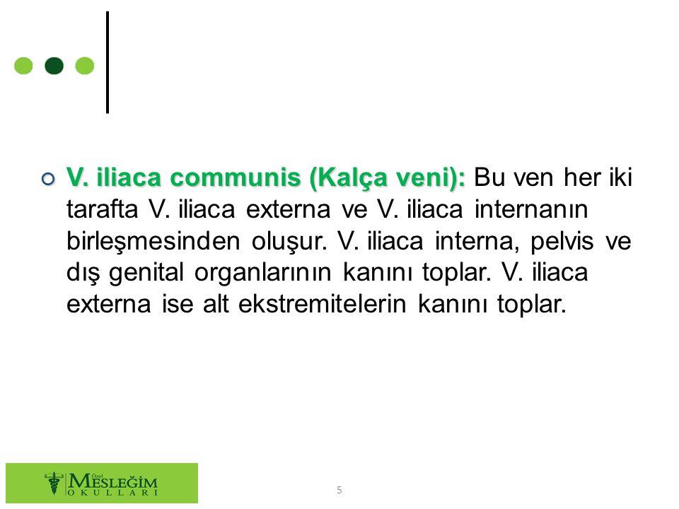 ○ V.saphena magna (Büyük safen ven): ○ V.