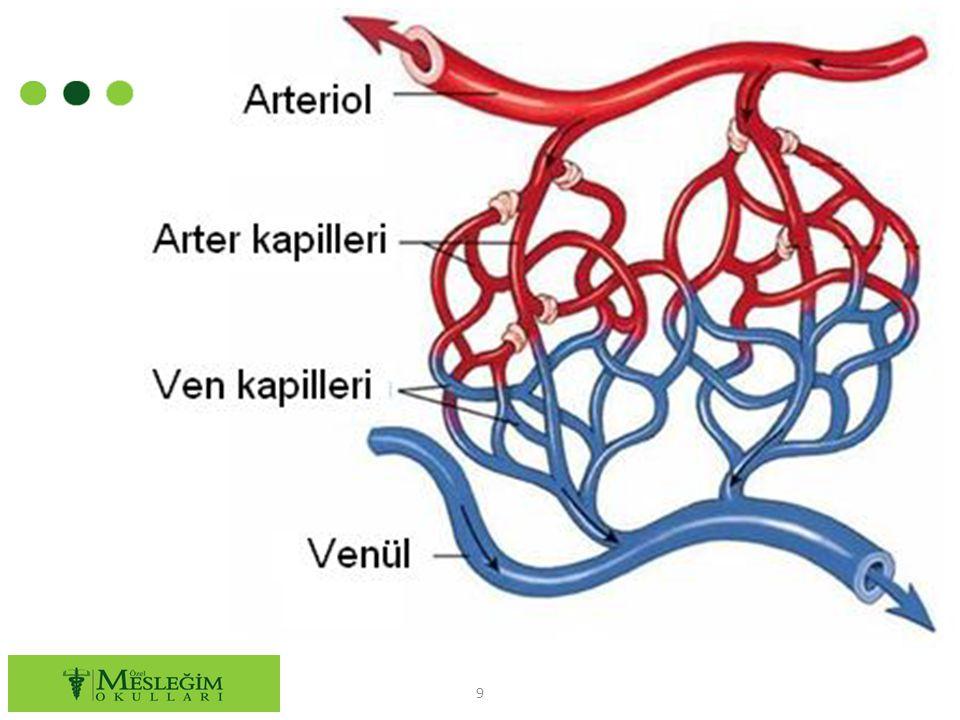 ○ Dolaşım sisteminin işlevlerinden biri de damarlar içinde belli hızda ve sürekli olarak kan akımını sağlamaktır.