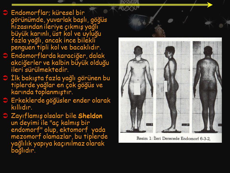  Endomorflar; küresel bir görünümde, yuvarlak başlı, göğüs hizasından ileriye çıkmış yağlı büyük karınlı, üst kol ve uyluğu fazla yağlı, ancak ince b