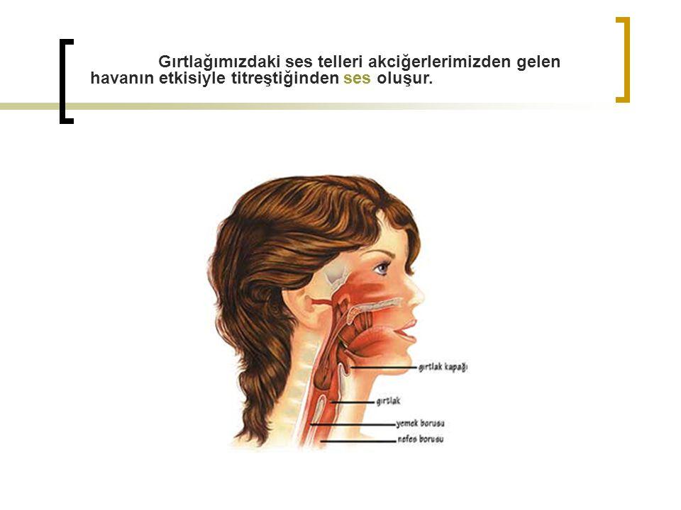 SESİN ÖZELLİKLERİ Sesleri birbirinden ayıran üç özellik vardır. 1) Yükseklik 2) Şiddet 3) Tını