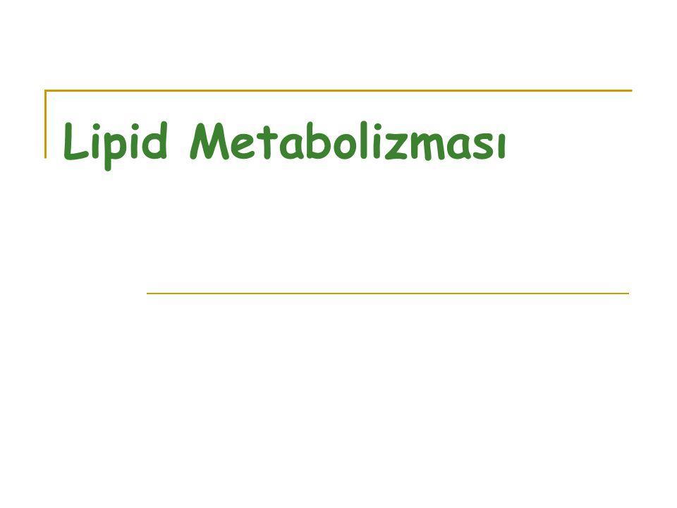 Lipid Metabolizması