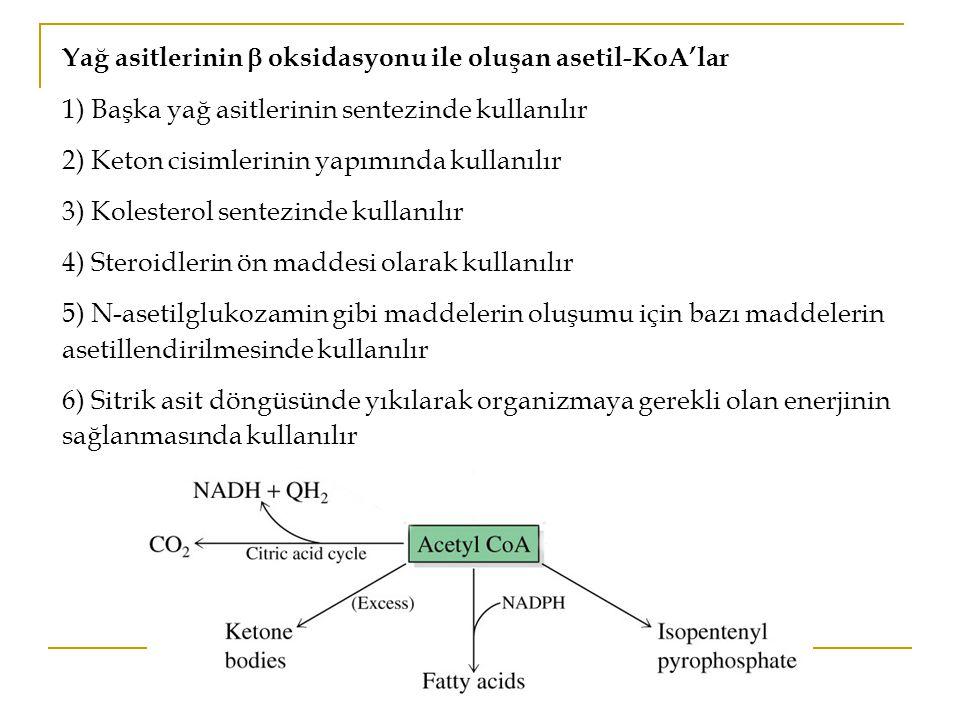 Yağ asitlerinin  oksidasyonu ile oluşan asetil-KoA'lar 1) Başka yağ asitlerinin sentezinde kullanılır 2) Keton cisimlerinin yapımında kullanılır 3) Kolesterol sentezinde kullanılır 4) Steroidlerin ön maddesi olarak kullanılır 5) N-asetilglukozamin gibi maddelerin oluşumu için bazı maddelerin asetillendirilmesinde kullanılır 6) Sitrik asit döngüsünde yıkılarak organizmaya gerekli olan enerjinin sağlanmasında kullanılır