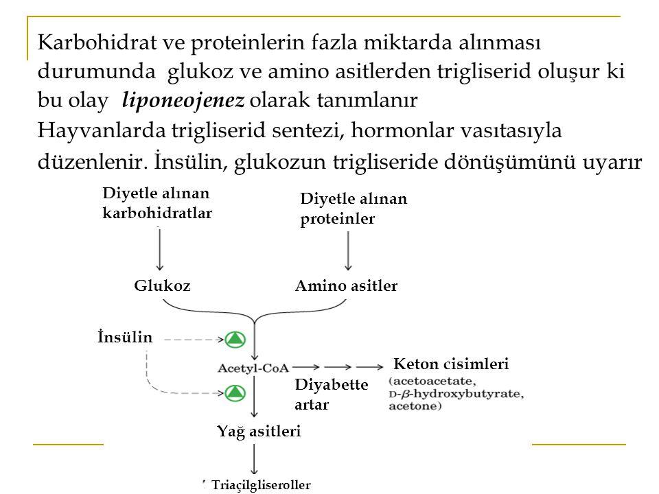 Karbohidrat ve proteinlerin fazla miktarda alınması durumunda glukoz ve amino asitlerden trigliserid oluşur ki bu olay liponeojenez olarak tanımlanır Hayvanlarda trigliserid sentezi, hormonlar vasıtasıyla düzenlenir.