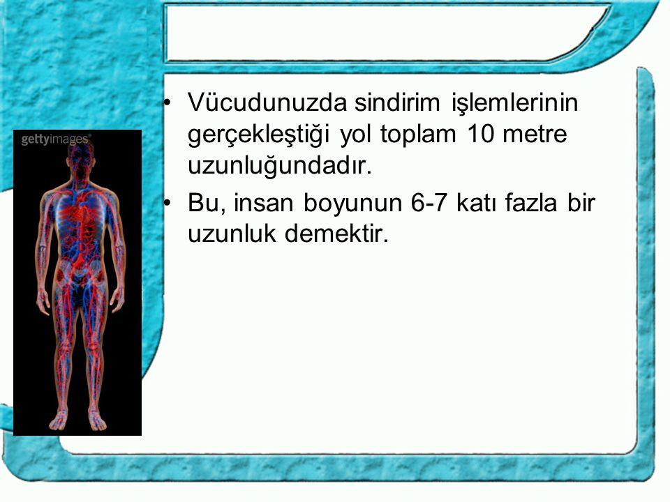 Vücudunuzda sindirim işlemlerinin gerçekleştiği yol toplam 10 metre uzunluğundadır. Bu, insan boyunun 6-7 katı fazla bir uzunluk demektir.