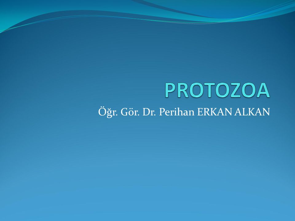 Öğr. Gör. Dr. Perihan ERKAN ALKAN