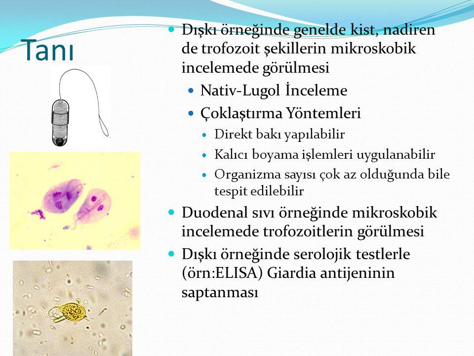 Tanı Dışkı örneğinde genelde kist, nadiren de trofozoit şekillerin mikroskobik incelemede görülmesi Nativ-Lugol İnceleme Çoklaştırma Yöntemleri Direkt bakı yapılabilir Kalıcı boyama işlemleri uygulanabilir Organizma sayısı çok az olduğunda bile tespit edilebilir Duodenal sıvı örneğinde mikroskobik incelemede trofozoitlerin görülmesi Dışkı örneğinde serolojik testlerle (örn:ELISA) Giardia antijeninin saptanması