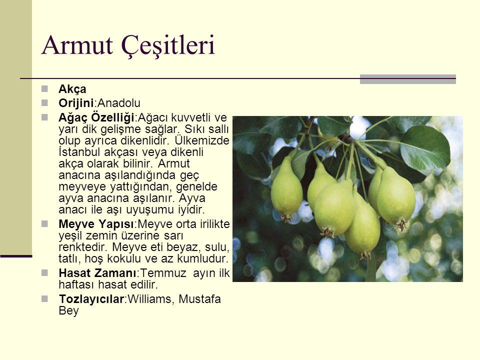 Armut Çeşitleri Akça Orijini:Anadolu Ağaç Özelliği:Ağacı kuvvetli ve yarı dik gelişme sağlar. Sıkı sallı olup ayrıca dikenlidir. Ülkemizde İstanbul ak