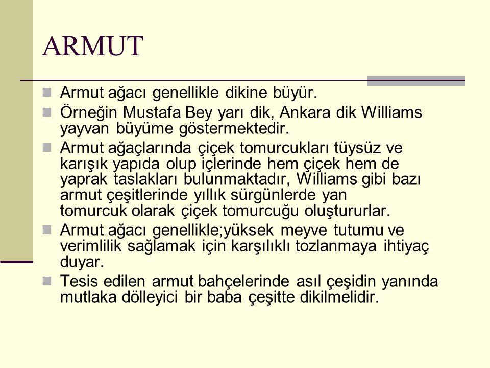 ARMUT Armut ağacı genellikle dikine büyür. Örneğin Mustafa Bey yarı dik, Ankara dik Williams yayvan büyüme göstermektedir. Armut ağaçlarında çiçek tom