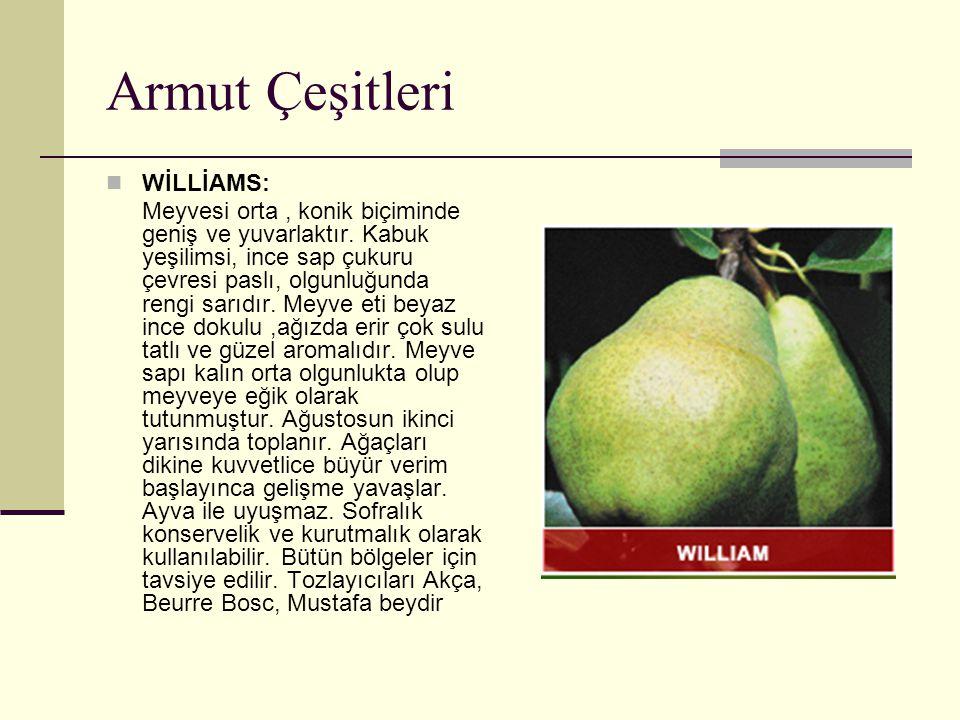 Armut Çeşitleri WİLLİAMS: Meyvesi orta, konik biçiminde geniş ve yuvarlaktır. Kabuk yeşilimsi, ince sap çukuru çevresi paslı, olgunluğunda rengi sarıd