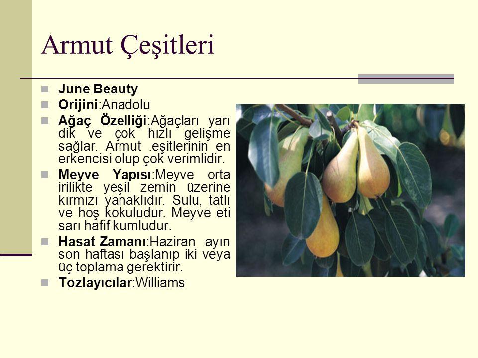 Armut Çeşitleri June Beauty Orijini:Anadolu Ağaç Özelliği:Ağaçları yarı dik ve çok hızlı gelişme sağlar. Armut.eşitlerinin en erkencisi olup çok verim