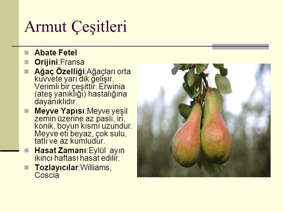 Armut Çeşitleri Abate Fetel Orijini:Fransa Ağaç Özelliği:Ağaçları orta kuvvete yarı dik gelişir. Verimli bir çeşittir. Erwinia (ateş yanıklığı) hastal