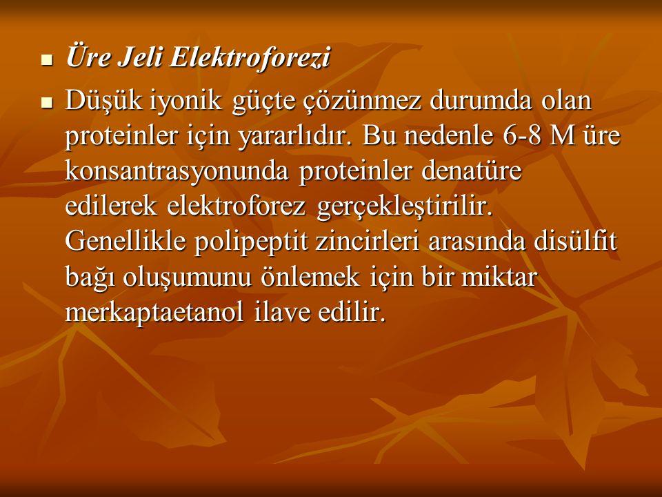 Üre Jeli Elektroforezi Üre Jeli Elektroforezi Düşük iyonik güçte çözünmez durumda olan proteinler için yararlıdır. Bu nedenle 6-8 M üre konsantrasyonu
