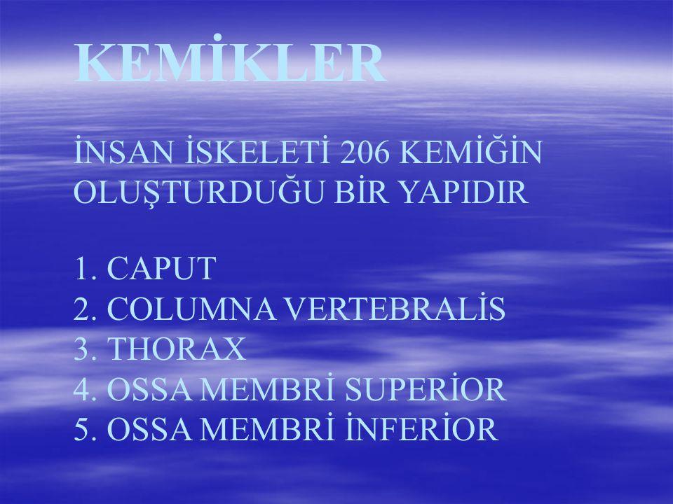 OYNAR EKLEMLER DÜZ EKLEM (OMURLAR ARASI) MENTEŞE EKLEM (HUMEROULNAR EKLEM) MAKARA EKLEM (PROKSİMAL RADİOULNAR ) ELİPSOİD EKLEM (RADİOKALPAR EKLEM) EYERSİ EKLEM (CARPOMETACARPAL EKLEM) KÜRESEL EKLEM (ART.HUMERİ-COXA)