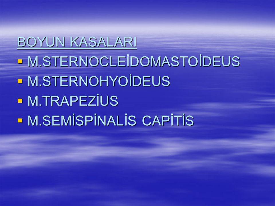 BAŞ KASALARI  M.ORBİCULARİS OCULİ  M.ZYGOMATİCUS MAJOR  M.ZYGOMATİCUS MİNOR  M.ORBİCULARİS ORİS  M.MASSATER