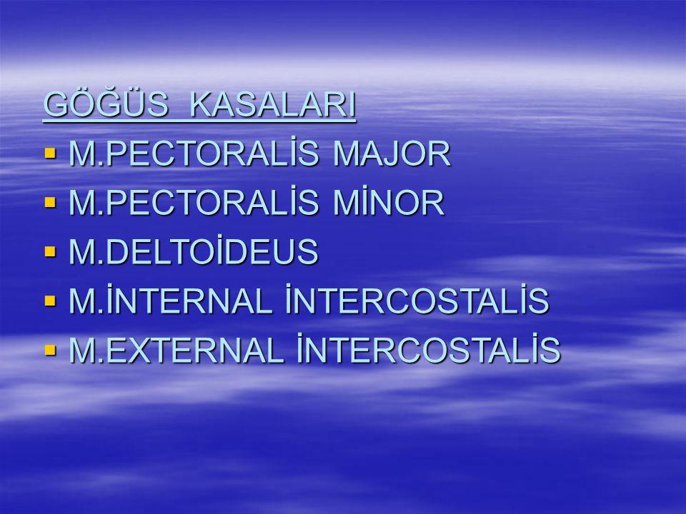 SIRT KASALARI  M.TRAPEZİUS  M.LATİSMUS DORSİ  M.ROMBOİDEUS MİNOR  M.ROMBOİDEUS MAJOR  M.İNFRASPİNATUS  M.SUPRASPİNATUS