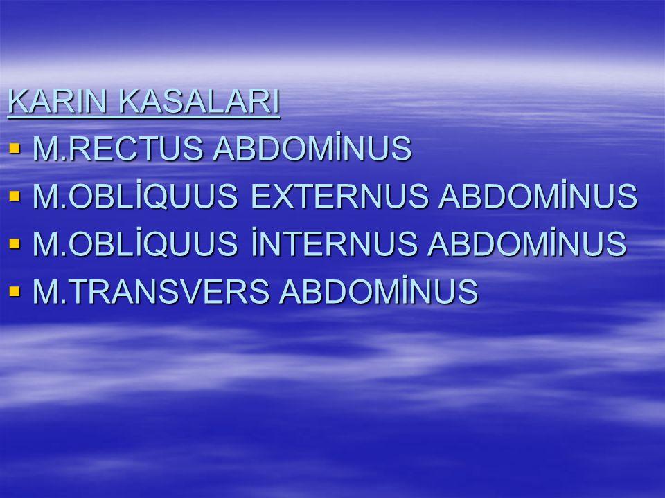 GÖĞÜS KASALARI  M.PECTORALİS MAJOR  M.PECTORALİS MİNOR  M.DELTOİDEUS  M.İNTERNAL İNTERCOSTALİS  M.EXTERNAL İNTERCOSTALİS