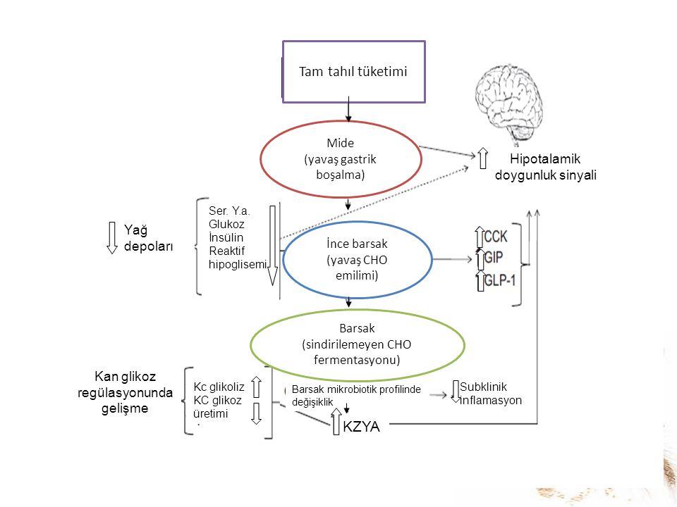 Ser. Y.a. Glukoz İnsülin Reaktif hipoglisemi Yağ depoları Tam tahıl tüketimi Kc glikoliz KC glikoz üretimi Barsak mikrobiotik profilinde değişiklik Su
