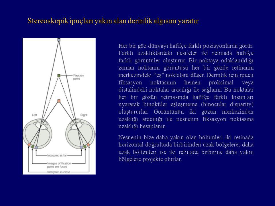 Stereoskopik ipuçları yakın alan derinlik algısını yaratır Her bir göz dünyayı hafifçe farklı pozisyonlarda görür. Farklı uzaklıklardaki nesneler iki