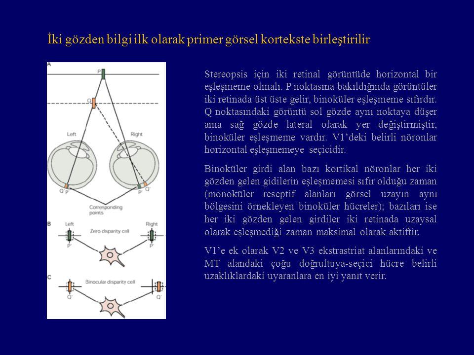 İki gözden bilgi ilk olarak primer görsel kortekste birleştirilir Stereopsis için iki retinal görüntüde horizontal bir eşleşmeme olmalı. P noktasına b