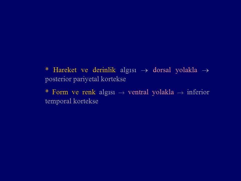 * Hareket ve derinlik algısı  dorsal yolakla  posterior pariyetal kortekse * Form ve renk algısı  ventral yolakla  inferior temporal kortekse