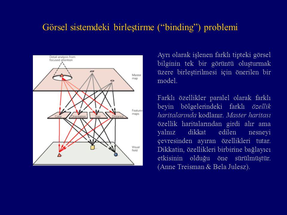 """Görsel sistemdeki birleştirme (""""binding"""") problemi Ayrı olarak işlenen farklı tipteki görsel bilginin tek bir görüntü oluşturmak üzere birleştirilmesi"""