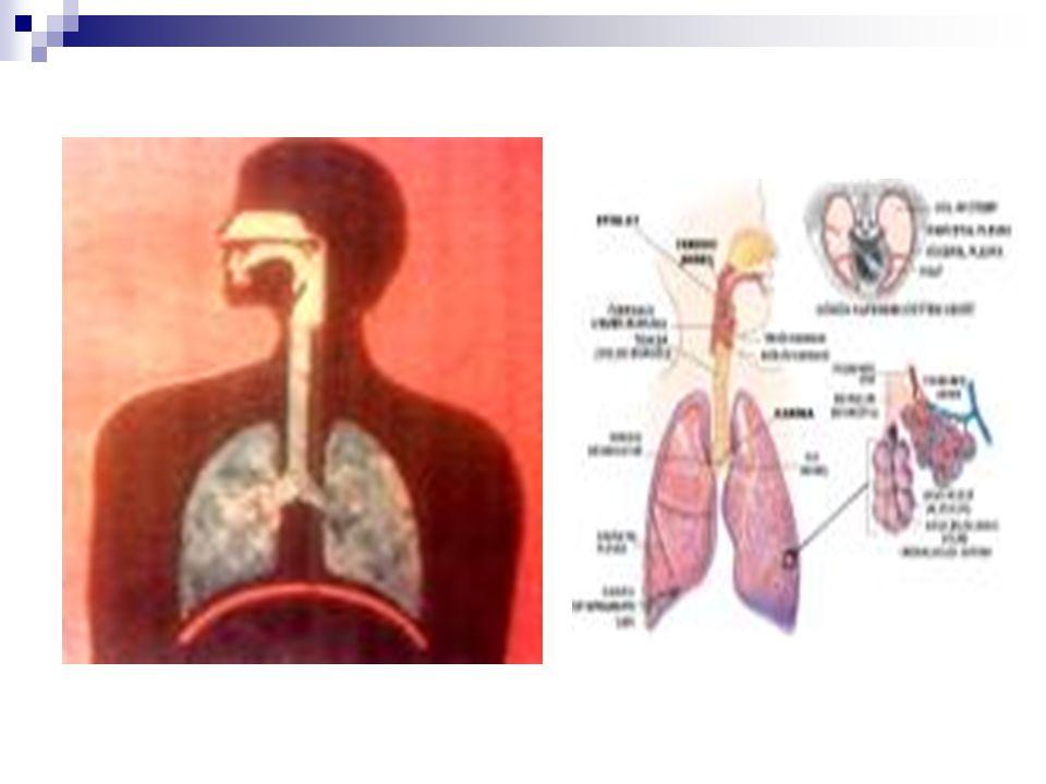 MİDE Benim adım mide.Sindirim sistemi elema- nıyım.Karın boşluğunun sol üst yanından sağ tarafa kıvrılarak uzanırım.